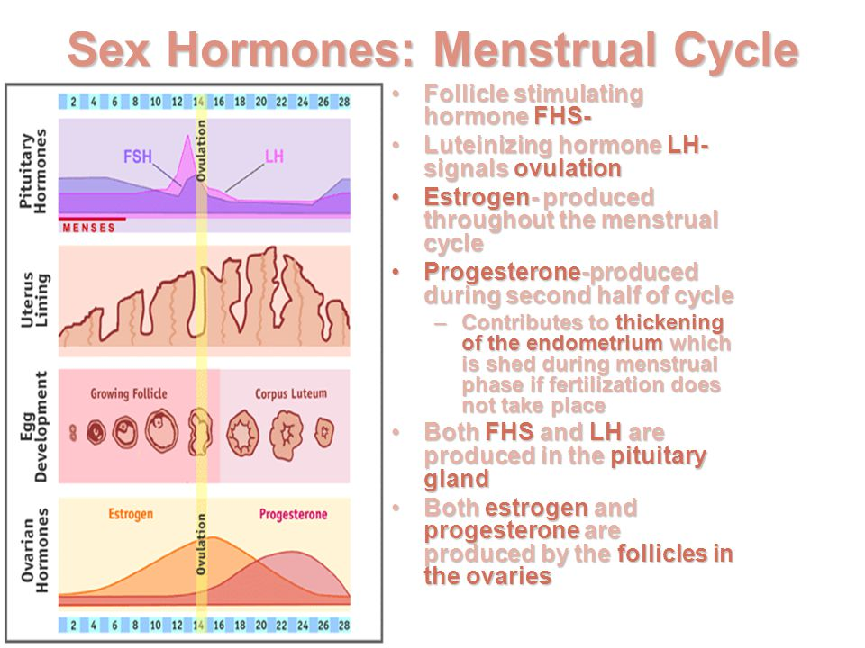 Menstrual Cycle Calculator - calculate your Period