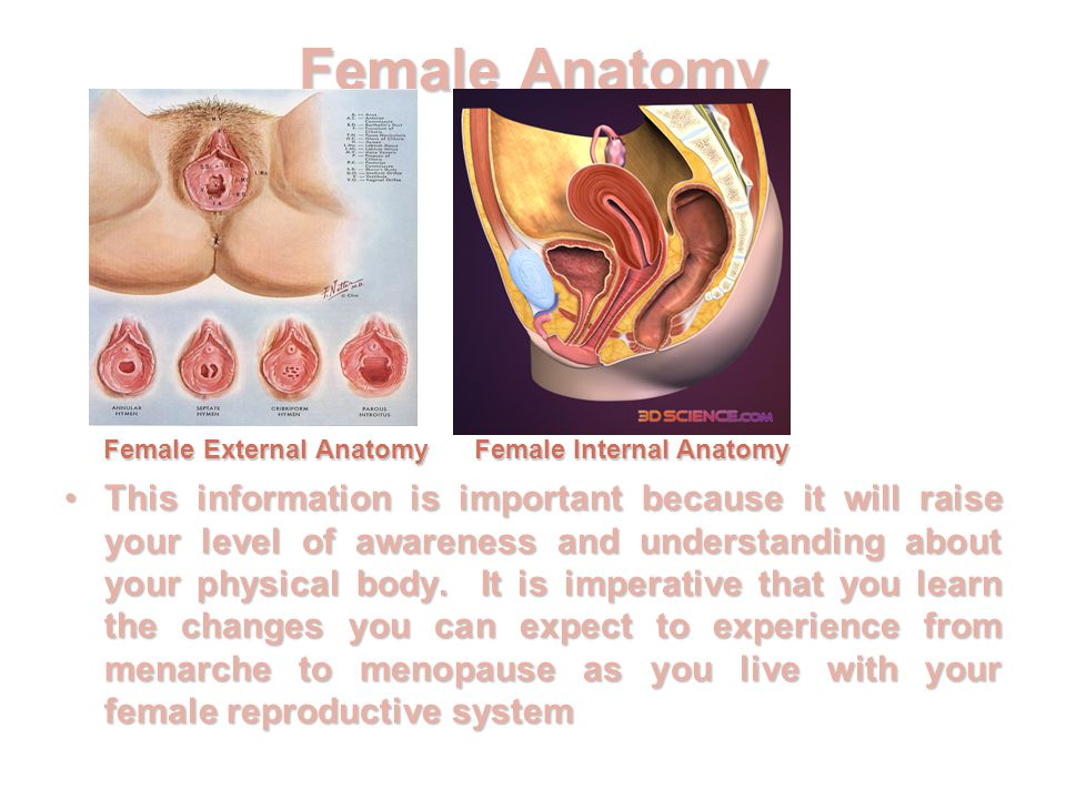 Female Sexual Anatomy And Physiology Ppt Video Online Download