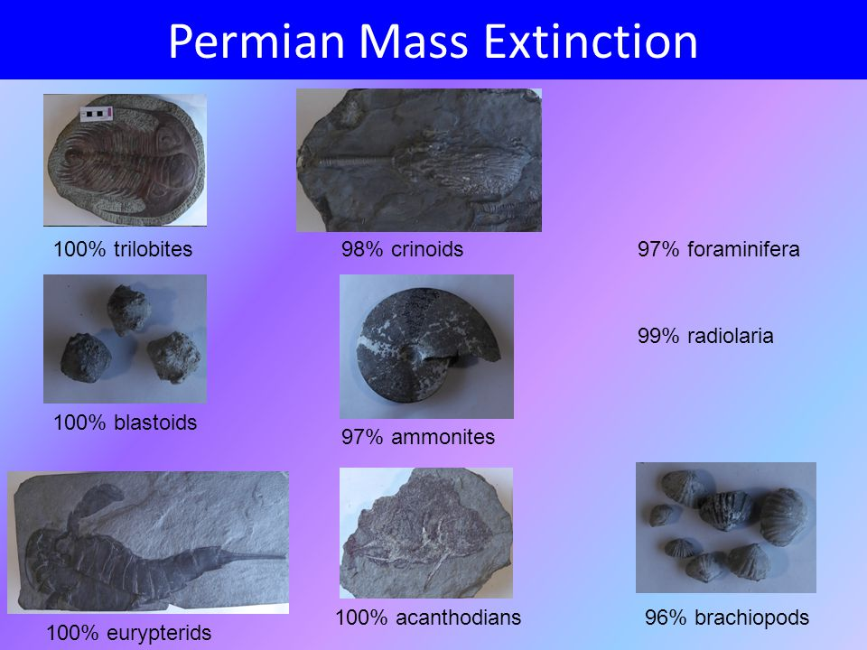 mass extinction events causes and effects Exploring the causes of mass extinction events  research into the causes of mass extinction events  outstanding problems in understanding the causes and effects of mass extinctions.