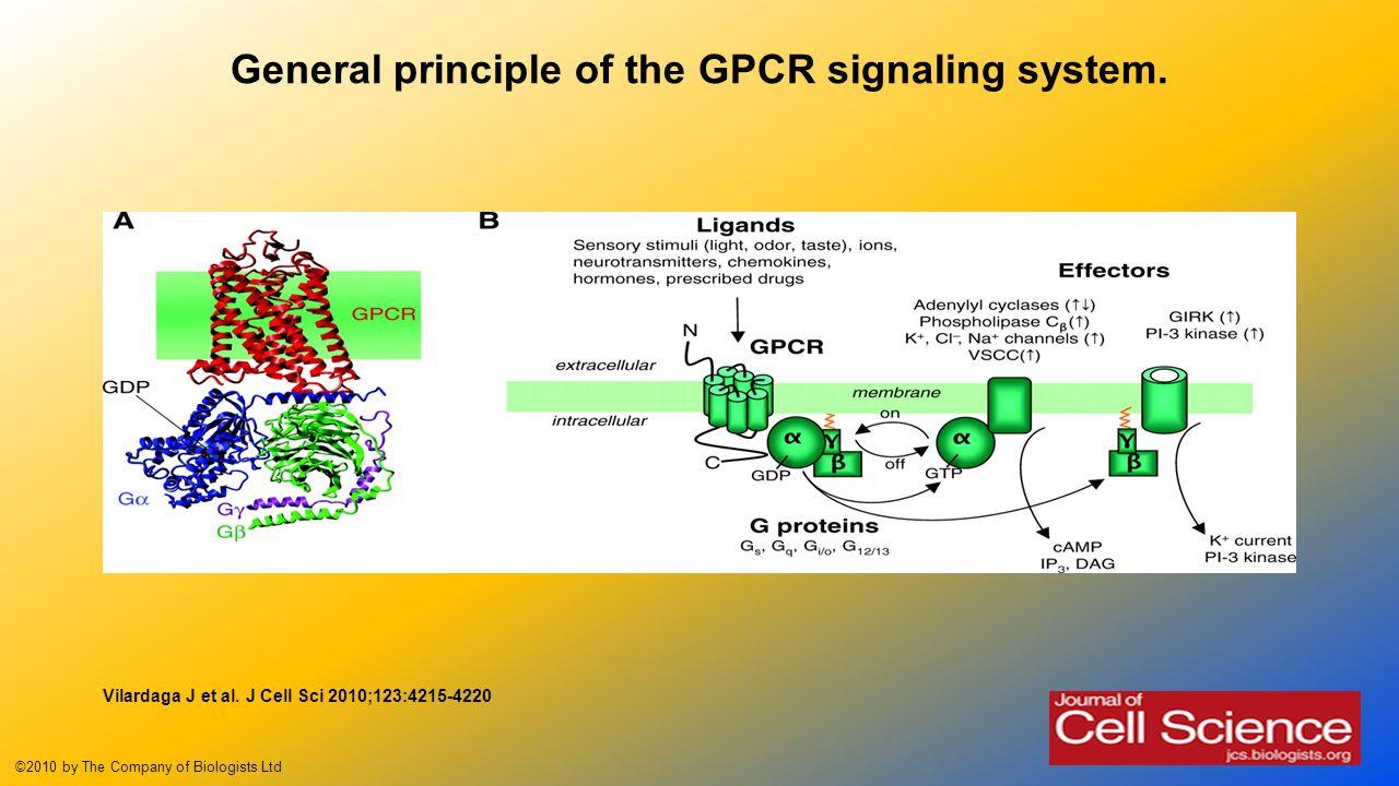 general signaling principles In general, genomics and high-throughput studies support the less modular view   analysis has made great progress in determining signaling principles (alon,.