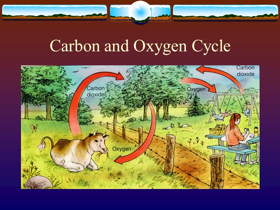 Carbon and Oxygen Cycle