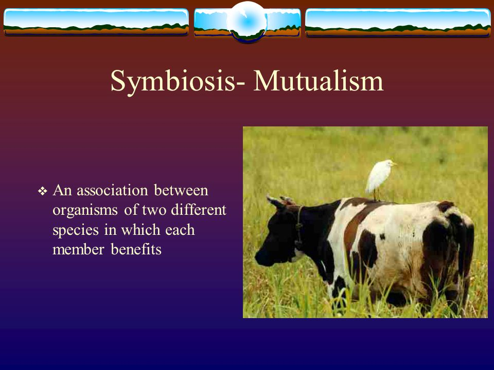 Symbiosis- Mutualism An association between organisms of two different species in which each member benefits.