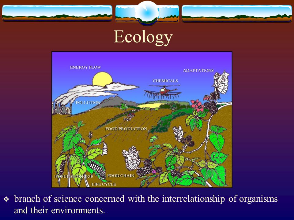 Ecology branch of science concerned with the interrelationship of organisms and their environments.
