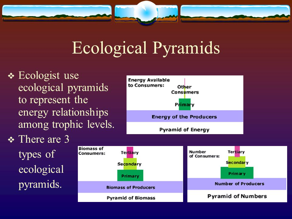 Ecological Pyramids Ecologist use ecological pyramids to represent the energy relationships among trophic levels.