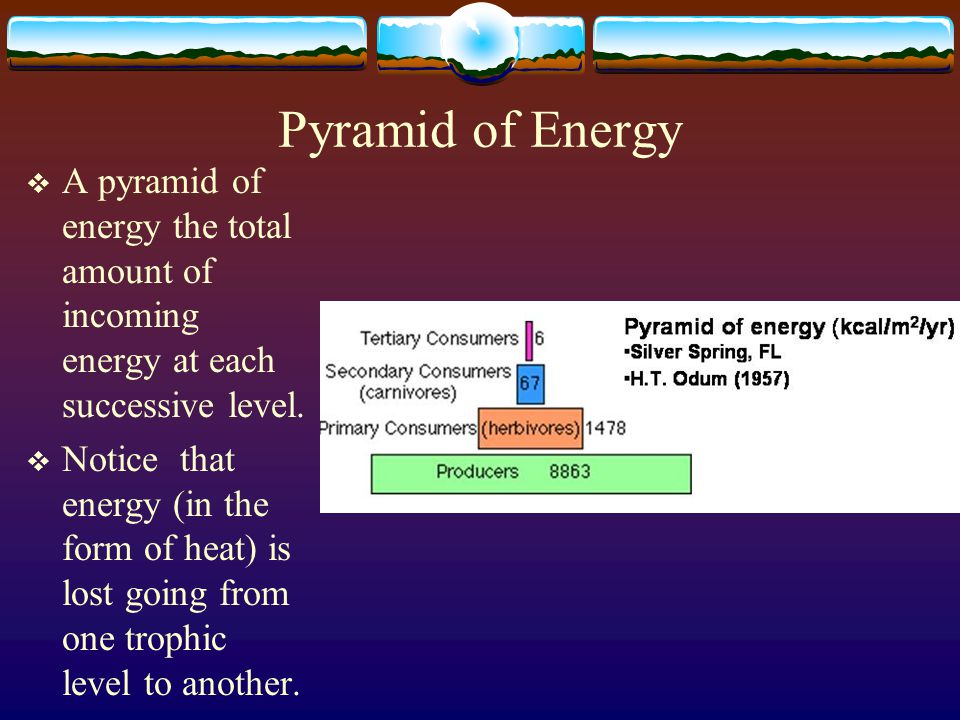 Pyramid of Energy A pyramid of energy the total amount of incoming energy at each successive level.