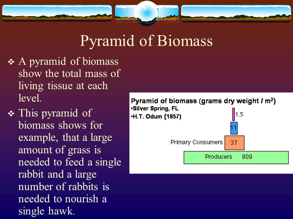 Pyramid of Biomass A pyramid of biomass show the total mass of living tissue at each level.