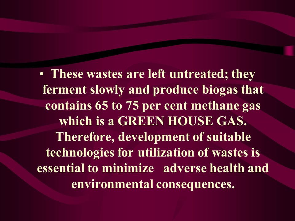 These wastes are left untreated; they ferment slowly and produce biogas that contains 65 to 75 per cent methane gas which is a GREEN HOUSE GAS.