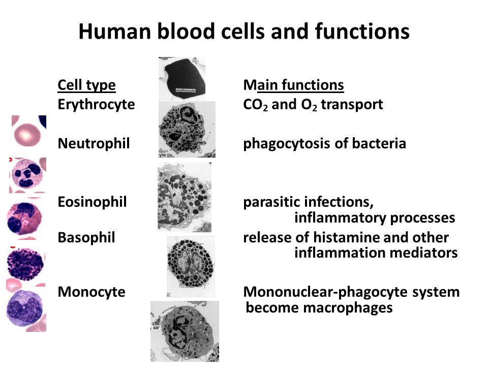 the functions of the main cell The cell (slide 1, which shows cell division) is a basic unit for life forms as well as enabling sophisticated control of biochemical processes by providing compartments and regulating chemical fluxes between them, cells also have structural integrity and can exert forces in the case of multicellular organisms.
