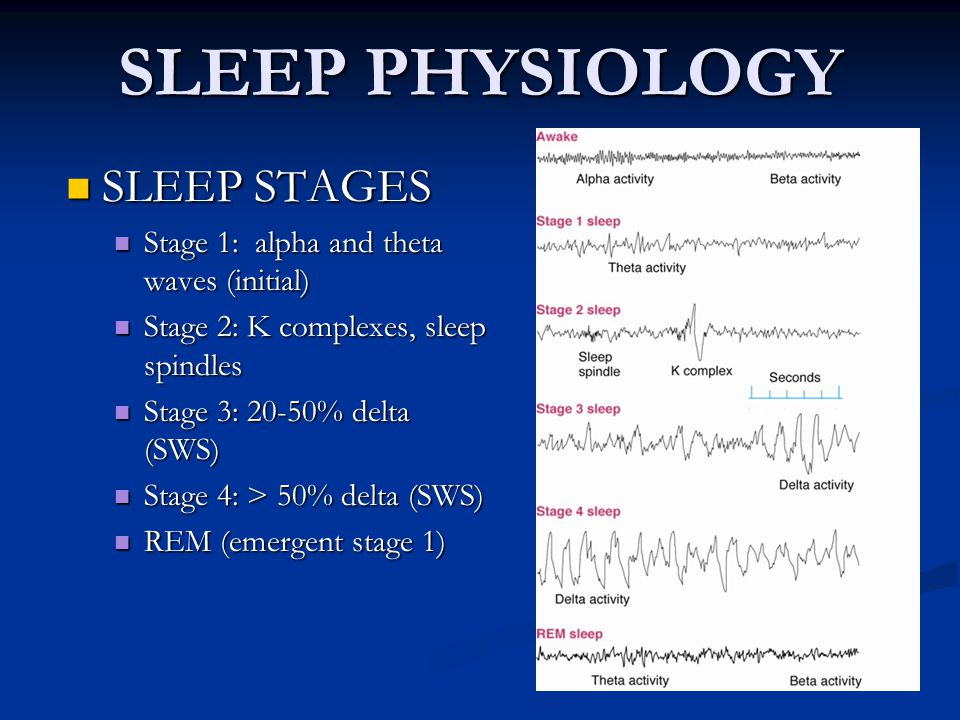 Alpha waves sleep study