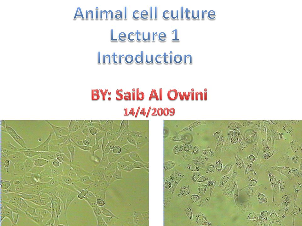 introduction to plant tissue culture pdf