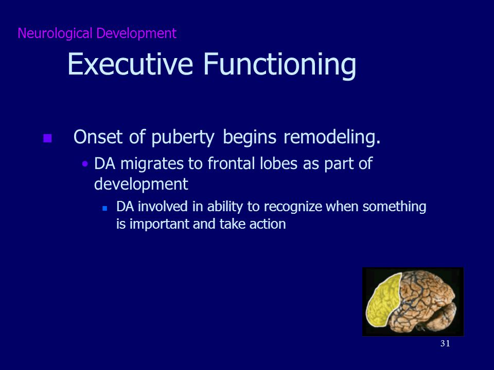 executive function important aspect of development Biological development, the progressive changes in size, shape, and function during the life of an organism by which its genetic potentials (genotype) are translated into functioning mature systems (phenotype) most modern philosophical outlooks would consider that development of some kind or other.