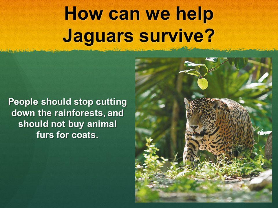Jaguars By Thomas Byrd Ppt Video Online Download