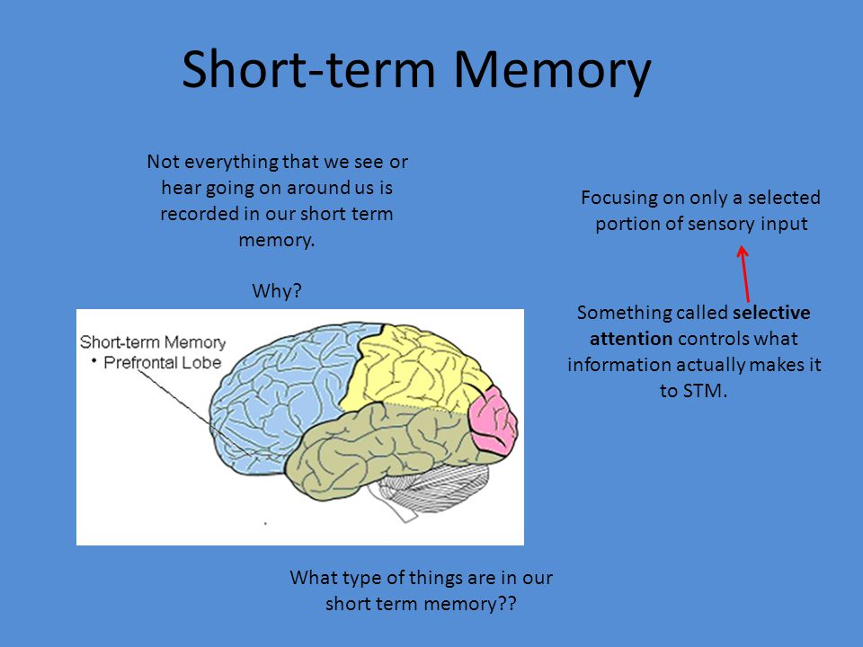 comparing short term memory to primary memory Working memory is short-term memory however, instead of all information going into one single store, there are different systems for different types of information.