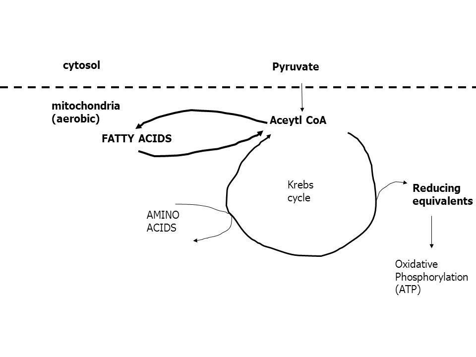 propionate krebs cycle
