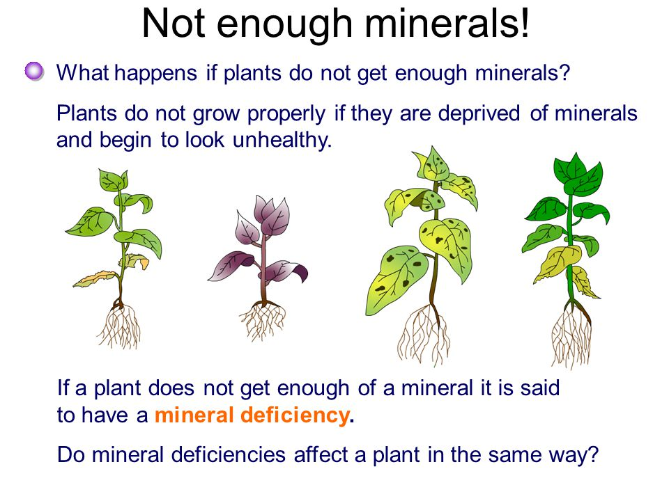 Plants and minerals