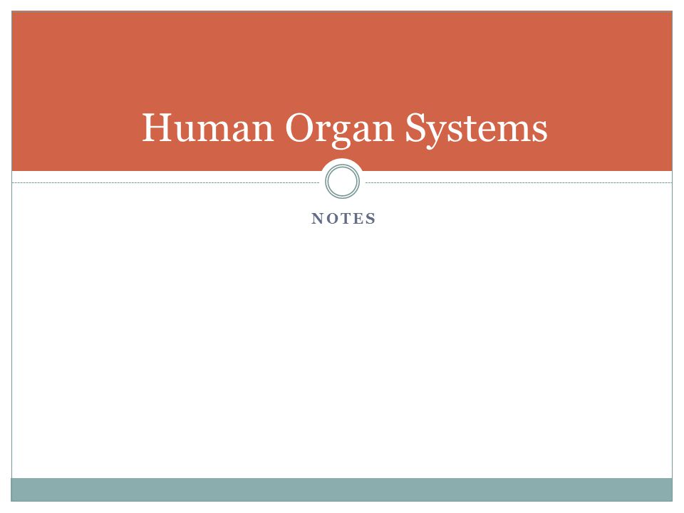 Human Organ Systems Notes