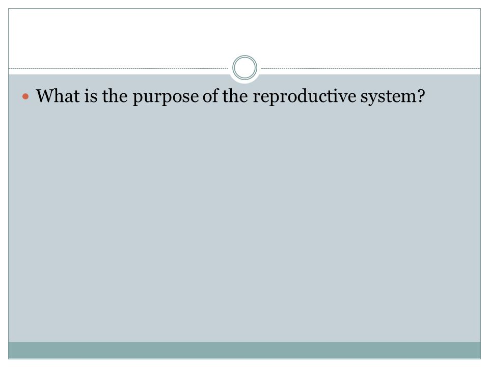What is the purpose of the reproductive system