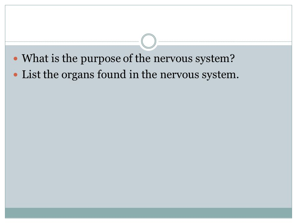 What is the purpose of the nervous system