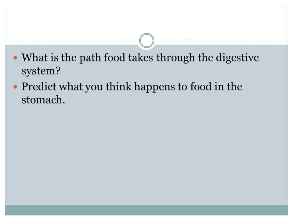 What is the path food takes through the digestive system
