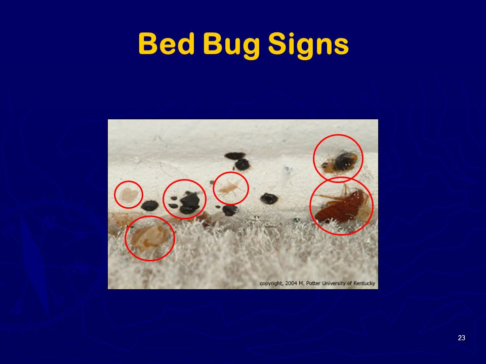 Bed Bugs Signs 28 Images 25 Unique Signs Of Bed Bugs