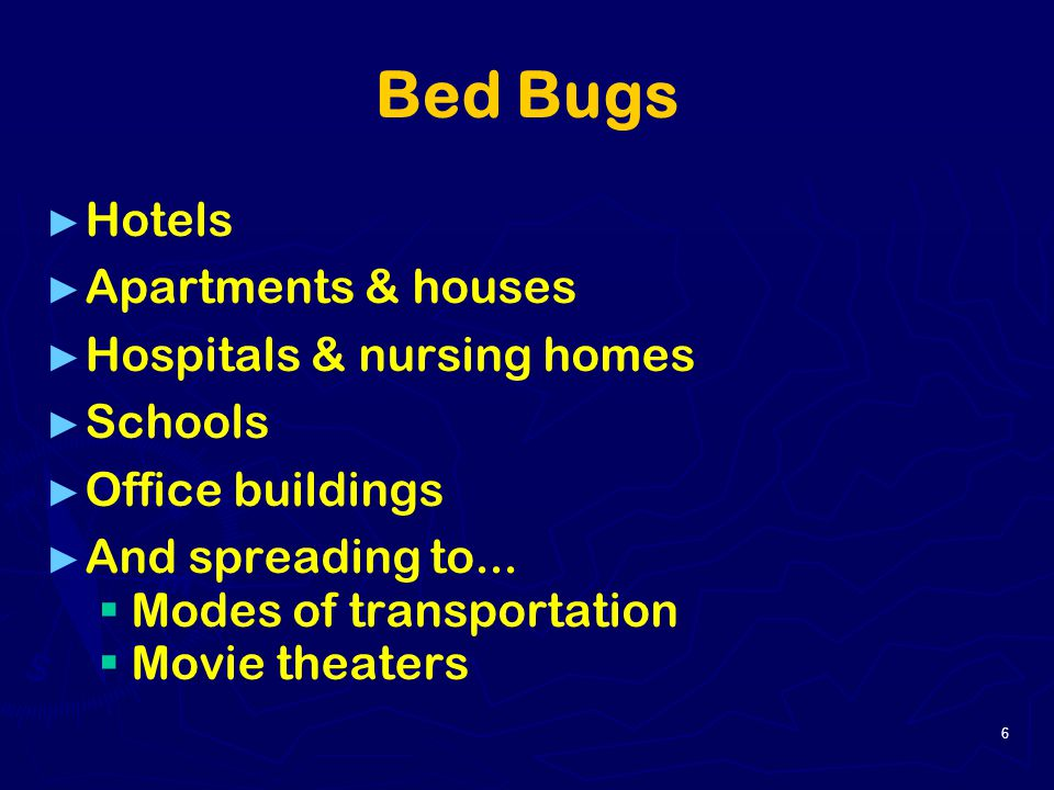 Bed Bugs Office Buildings