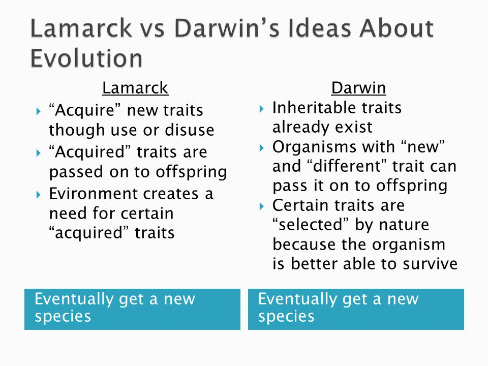 compare darwin s theory evolution lamarck s theory evolution Charles darwin is famous for the theory of evolution evolutionary biologists studied both lamarck and darwin's theories darwin's theory has been supported.