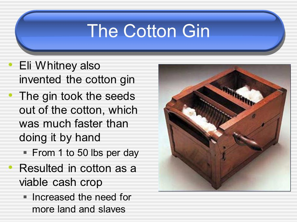 The Cotton Gin Eli Whitney also invented the cotton gin