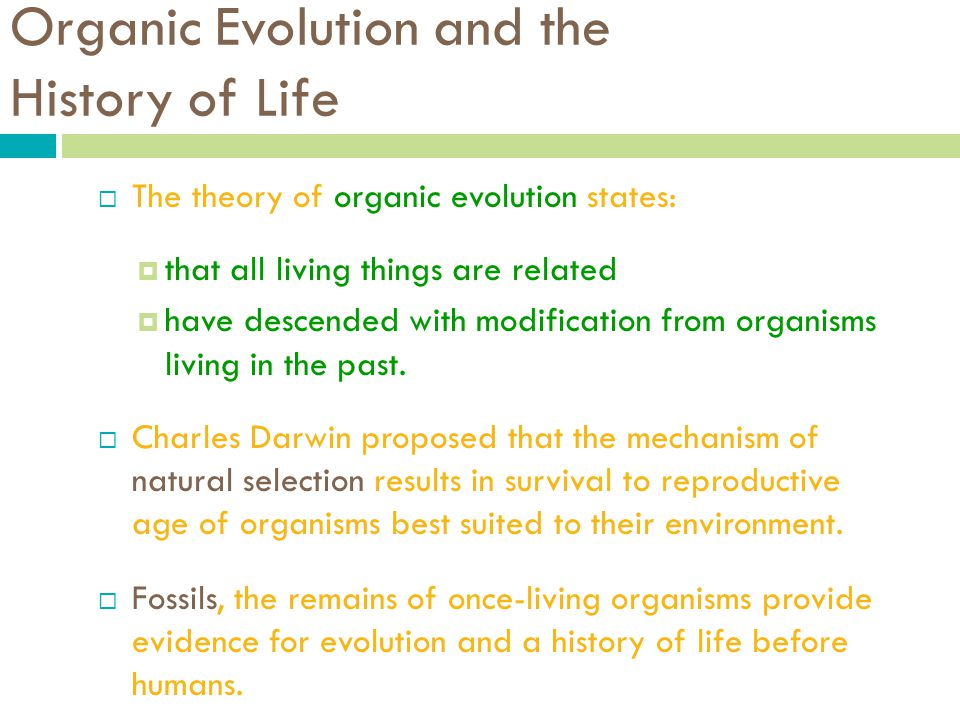 a history of the theories of organic evolution Theories of organic evolution from very early times, scientists have been trying to explain the diversity of life forms through various theories in the 19th century.