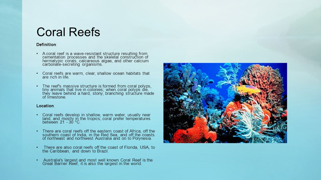 the three types of reefs There is also a multitude of resorts and hotels in the cities and towns along the  coast of the great barrier reef, catering to all types of visitors.