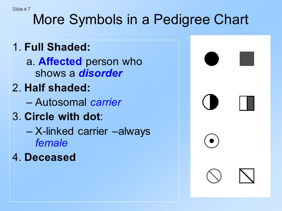 how to make a pedigree chart online