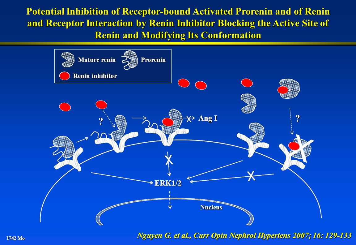 Potential Inhibition of Receptor-bound Activated Prorenin and of Renin
