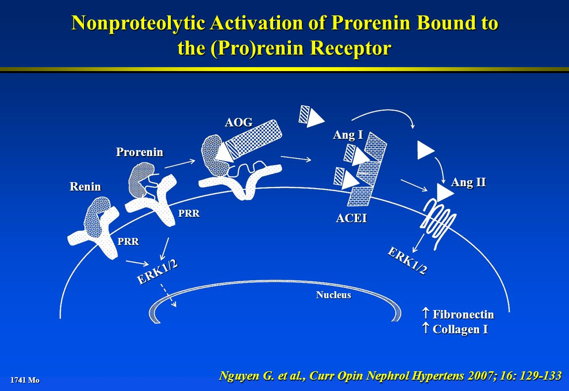 Nonproteolytic Activation of Prorenin Bound to the (Pro)renin Receptor