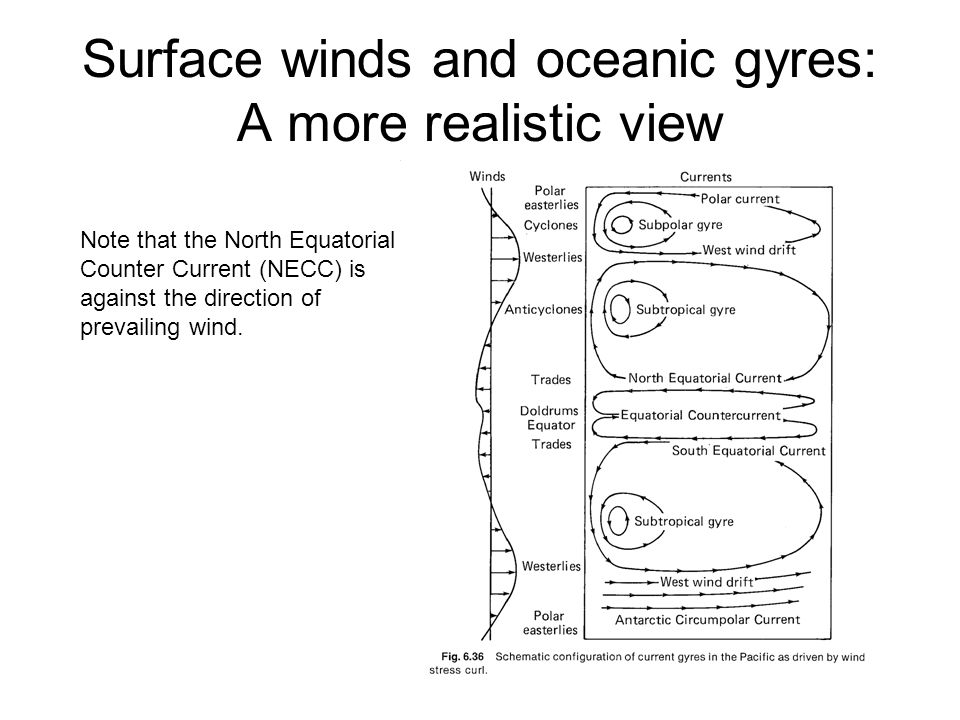 Surface winds and oceanic gyres: A more realistic view