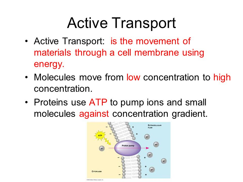 transport of substances through the cell Some substances that cannot readily pass through the cell membrane use a  transport in and out of cells  examples of substances that use facilitated diffusion.