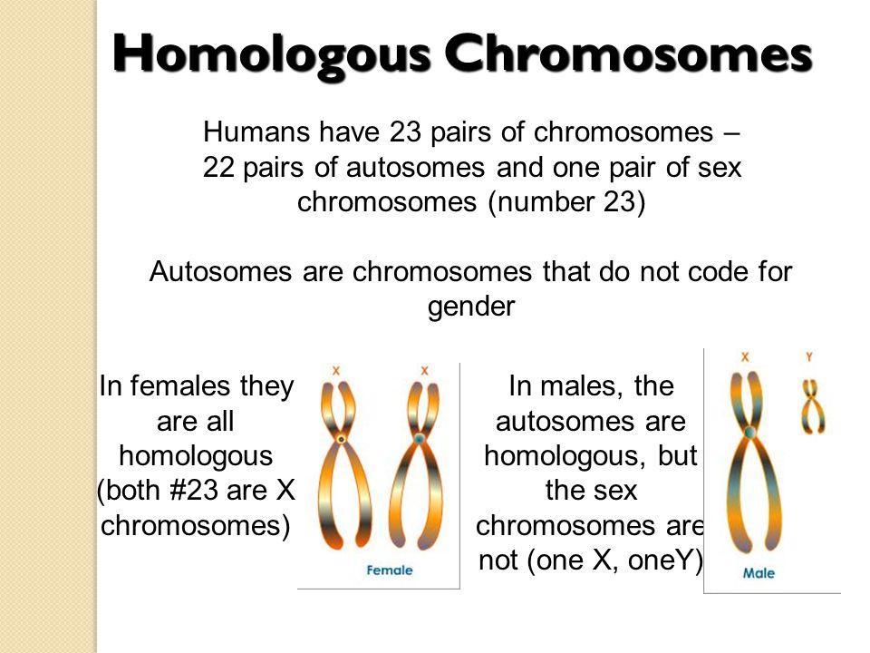 download Zaburzenia hormonalne