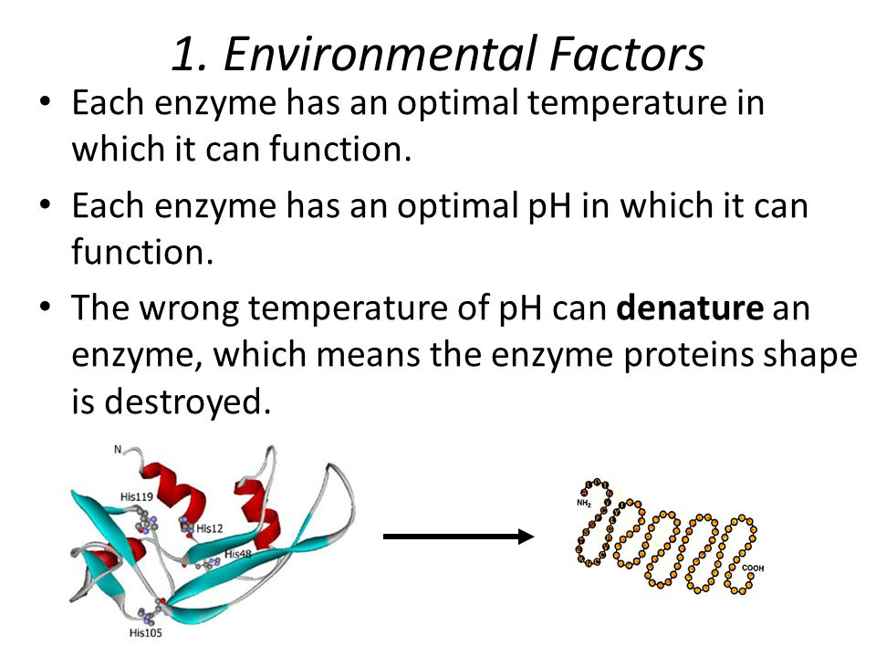 determining the optimal temperature and ph Science essays: determining optimum temperature and ph for enzymatic reactions of alpha amylase.