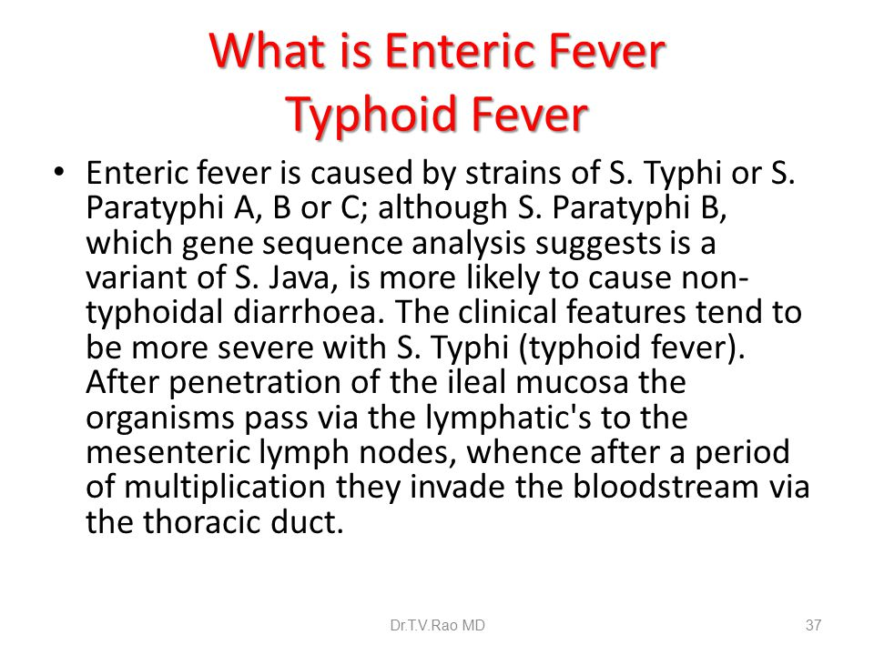 literary analysis on typhoid fever 042 reviews angela m said: a literary analysis of typhoid fever it's a beautiful and sad but a strangely told story ryan gosling told gq that harrison ford punched.