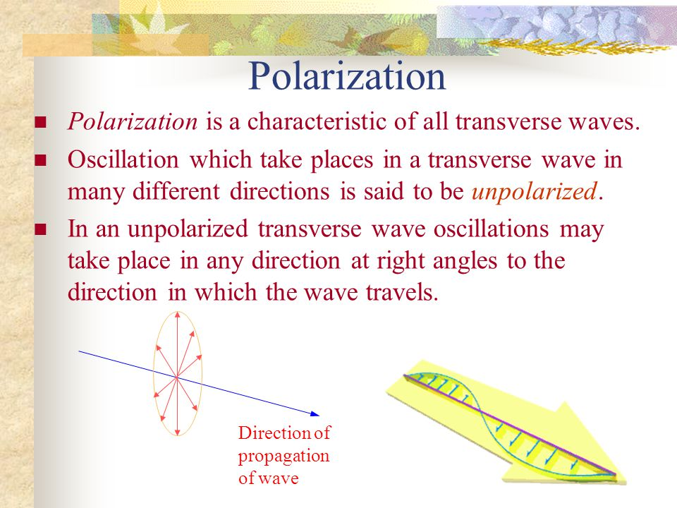 c51d4491c1a3 Polarization Polarization is a characteristic of all transverse waves.