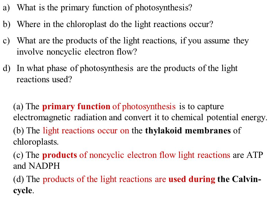 purpose of photosynthesis Get an answer for 'what is the purpose of photosynthesis' and find homework help for other science questions at enotes.
