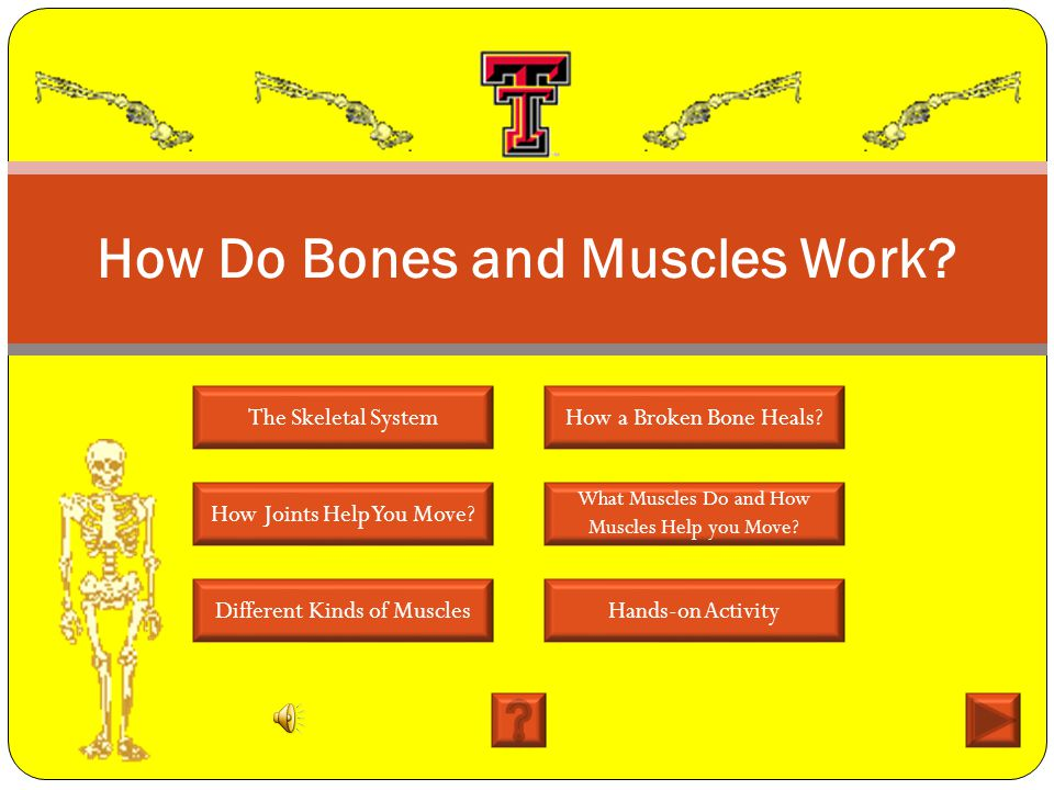 bones to muscles how do Our bones, muscles, and joints form our musculoskeletal system and enable us to do everyday physical activities.