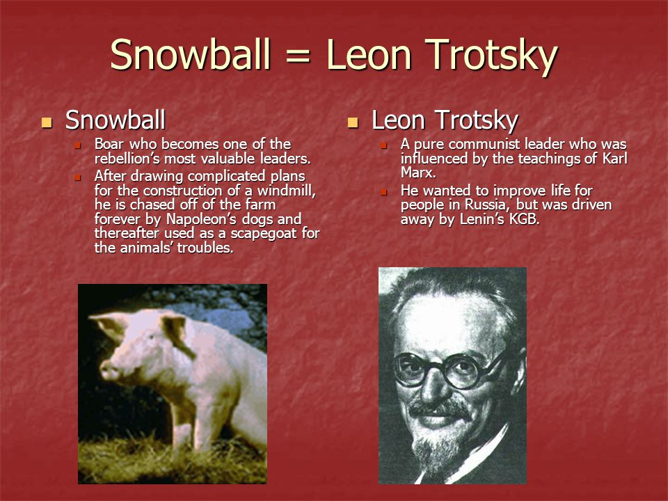 a comparison of napoleon and snowball in animal farm by george orwell Comparison between the  stalin and trotsky disagreed on russia's future where in animal farm napoleon and snowball  george orwell believes in trotsky and he.