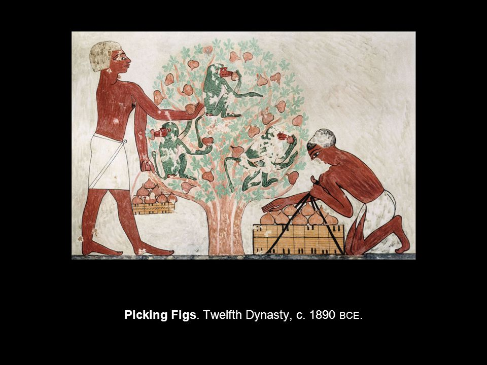 Picking Figs. Twelfth Dynasty, c BCE.