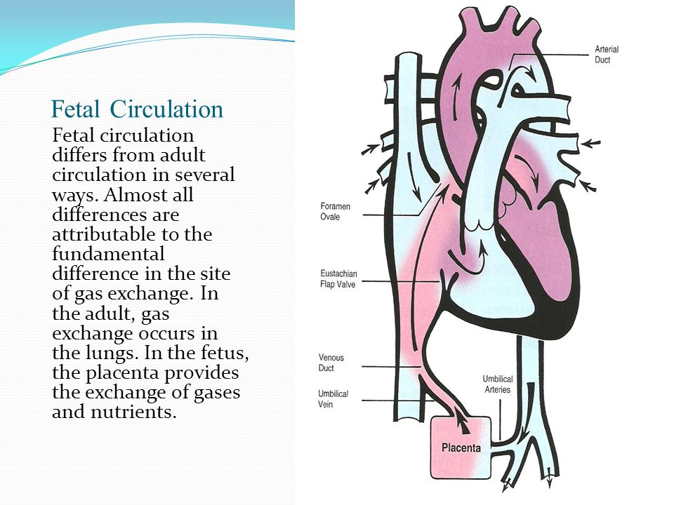 Adult Circulation 104
