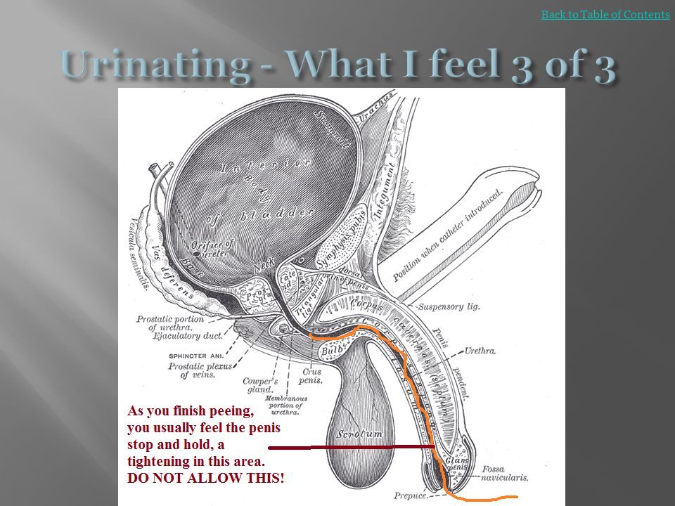 Urinating - What I feel 3 of 3