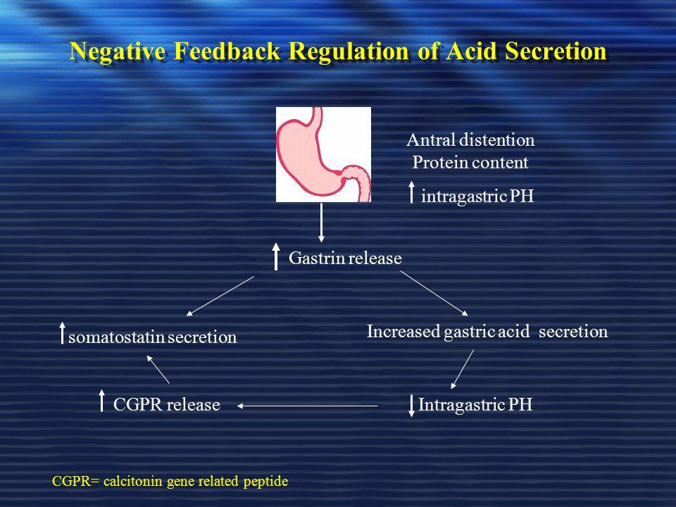Negative Feedback Regulation of Acid Secretion