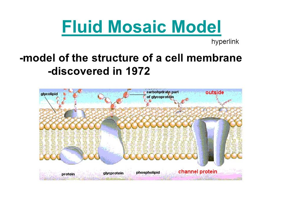 the fluid mosaic model of membrane structure Read and learn for free about the following article: fluid mosaic model: cell  membranes article.