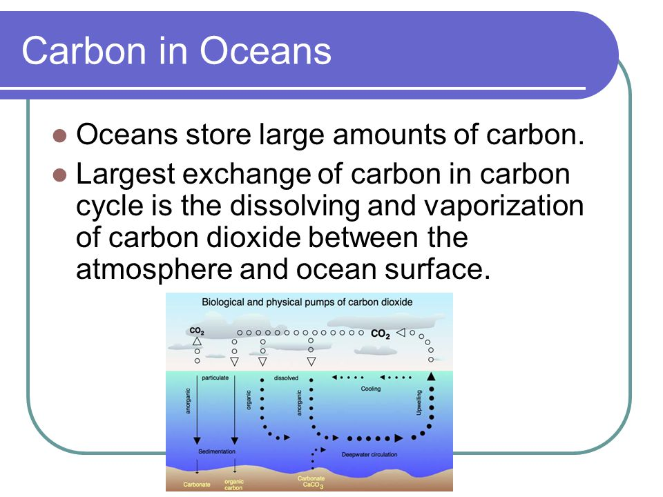 Carbon in Oceans Oceans store large amounts of carbon.
