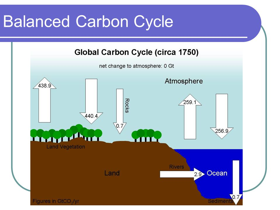 balance sheet of the carbon cycle Balance sheet of the carbon cycle topics: bacteria, dna, photosynthesis pages: 9 (1537 words) published: november 28, 2013 scientists estimate that the atmosphere holds 755 gigatonnes (gt) of carbon, mostly as carbon dioxide.