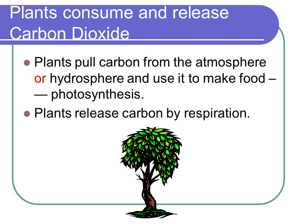 Plants consume and release Carbon Dioxide