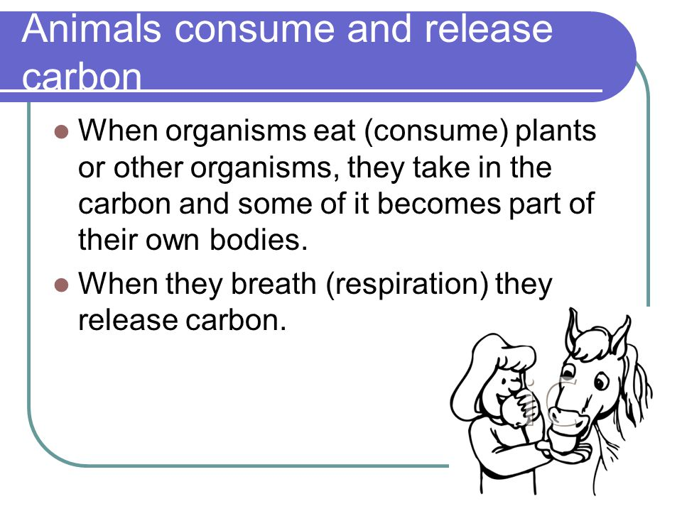 Animals consume and release carbon